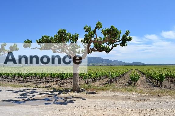 vinfrankrig